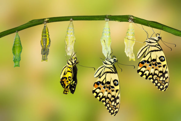 transformation butterfly